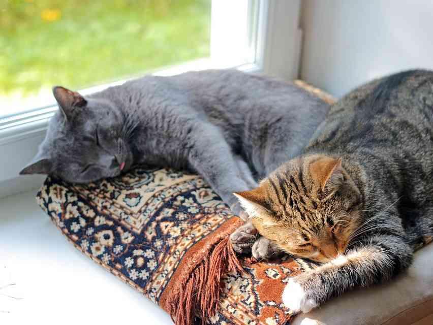 Immagine articolo: Perché i gatti fanno la pasta? Ecco Perché