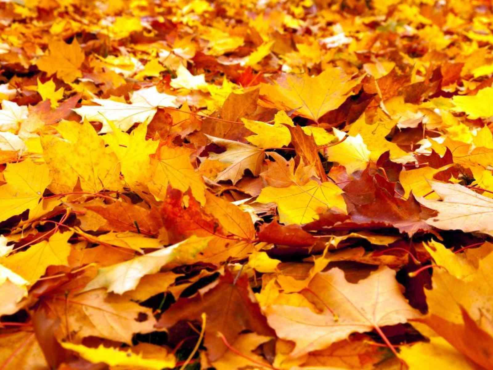 Immagine articolo: Perché in autunno gli alberi lasciano cadere le foglie? Ecco perché